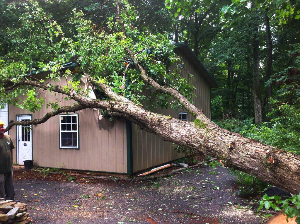 Tree Removal Service in Baltimore