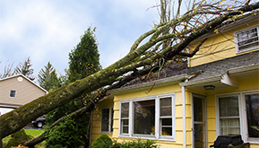 Tree Damage Hurricane