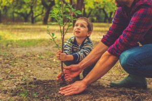 plant a new tree