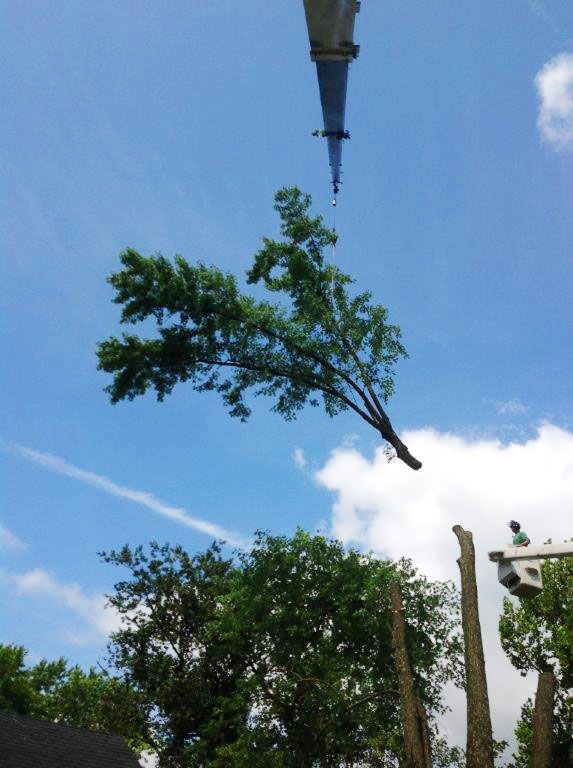 Tree removal by crane