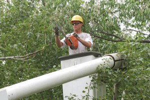 tree-trimming-services