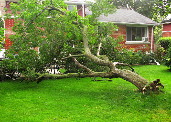 What Do I If My Neighbor S Tree Falls Into Yard